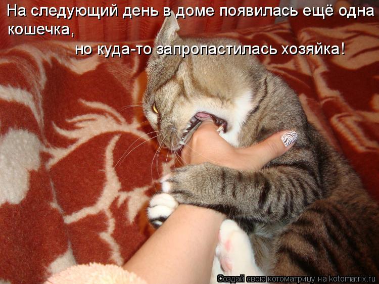 Котоматрица: На следующий день в доме появилась ещё одна кошечка,  но куда-то запропастилась хозяйка!