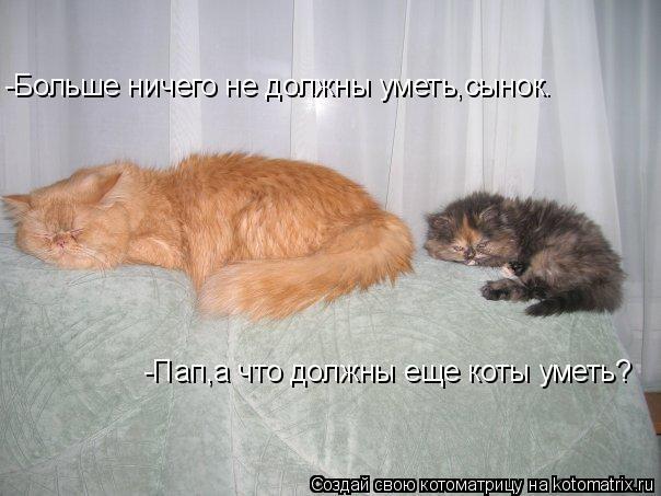 Котоматрица: -Пап,а что должны еще коты уметь? -Больше ничего не должны уметь,сынок.