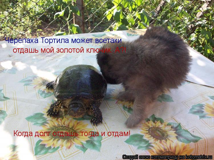 Котоматрица: Черепаха Тортила может всетаки  отдашь мой золотой ключик. А?! Когда долг отдашь тогда и отдам!