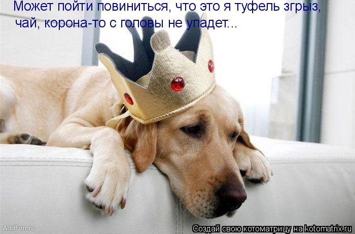 Котоматрица: чай, корона-то с головы не упадет... Может пойти повиниться, что это я туфель згрыз,