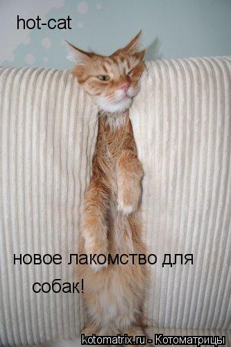 Котоматрица: hot-cat новое лакомство для  собак!