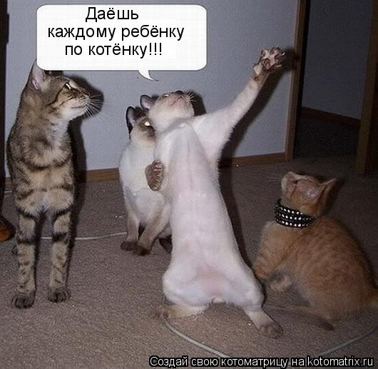 Котоматрица: Даёшь по котёнку!!! каждому ребёнку
