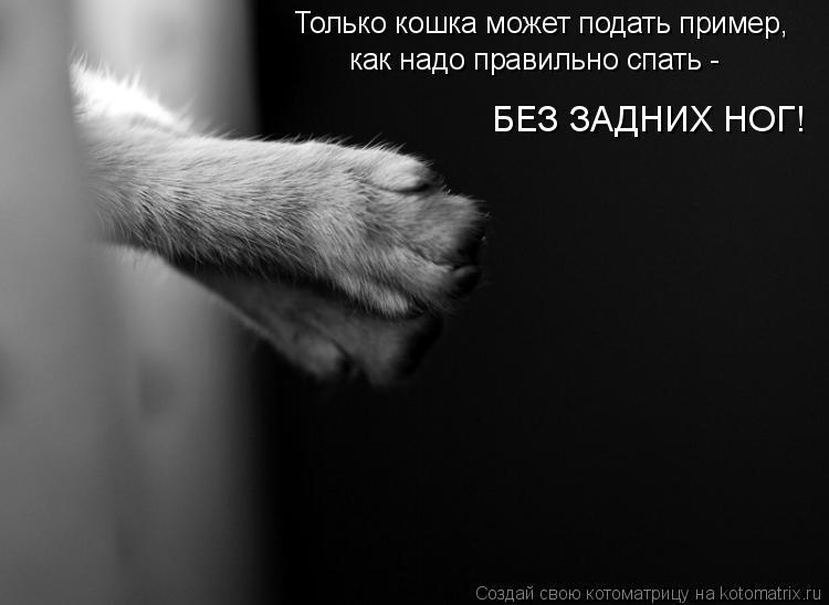 Котоматрица: Только кошка может подать пример, как надо правильно спать -  БЕЗ ЗАДНИХ НОГ!