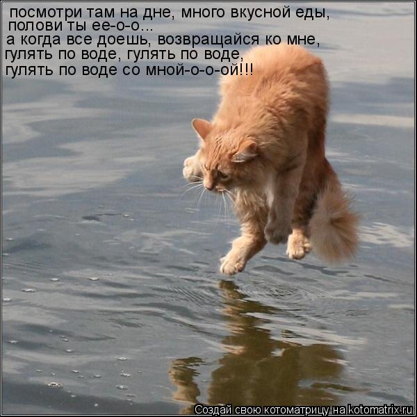 Котоматрица: посмотри там на дне, много вкусной еды, полови ты еe-о-о... а когда все доешь, возвращайся ко мне, гулять по воде, гулять по воде, гулять по воде