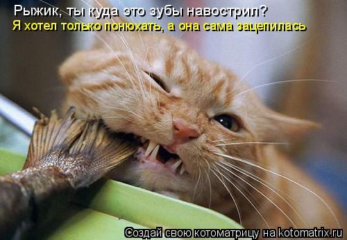 Котоматрица: Рыжик, ты куда это зубы навострил? Я хотел только понюхать, а она сама зацепилась