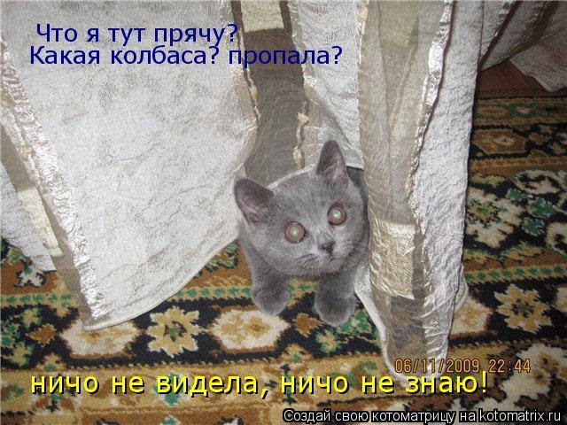 Котоматрица: Что я тут прячу? Какая колбаса? пропала? ничо не видела, ничо не знаю!