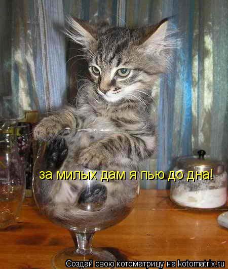 Котоматрица: за милых дам я пью до дна!