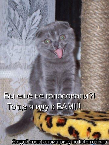 Котоматрица: Вы ещё не голосовали?! Тогда я иду к ВАМ!!!