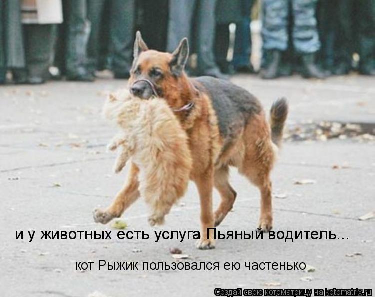 Котоматрица: и у животных есть услуга Пьяный водитель... кот Рыжик пользовался ею частенько