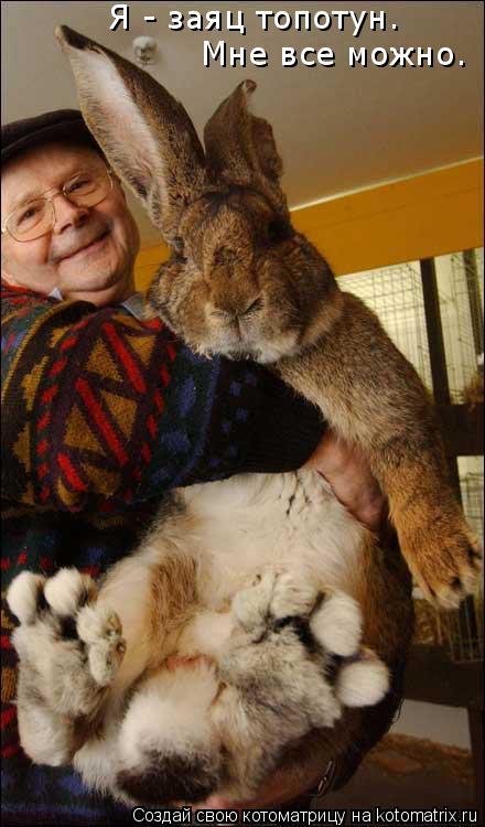 Котоматрица: Я - заяц топотун. Мне все можно.