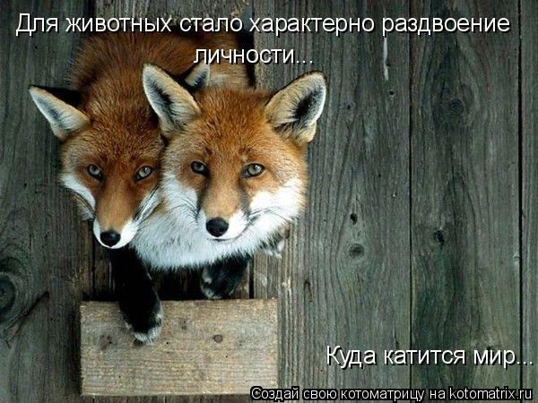 Котоматрица: Куда катится мир... Для животных стало характерно раздвоение личности...