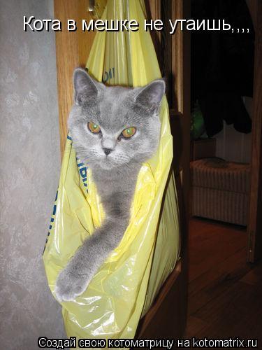 Котоматрица: Кота в мешке не утаишь,,,,