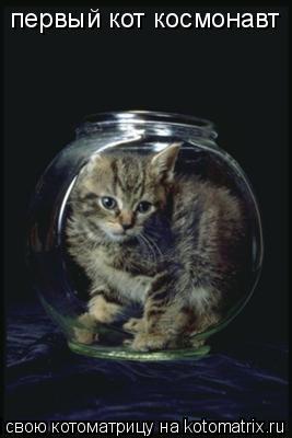 Котоматрица: первый кот космонавт