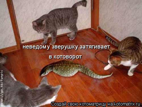 Котоматрица: неведому зверушку затягивает в котоворот