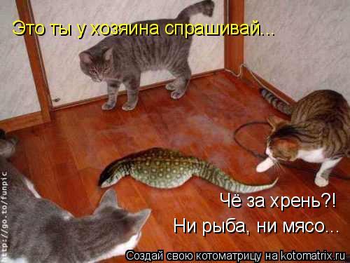 Котоматрица: Чё за хрень?!  Ни рыба, ни мясо... Это ты у хозяина спрашивай...