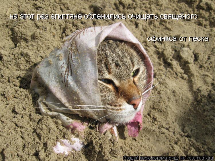 Котоматрица: ...на этот раз египтяне обленились очищать священого  сфинкса от песка