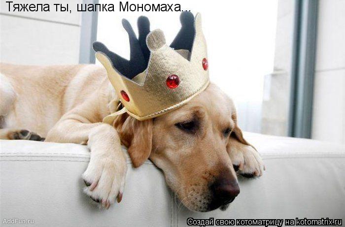 Котоматрица: Тяжела ты, шапка Мономаха...
