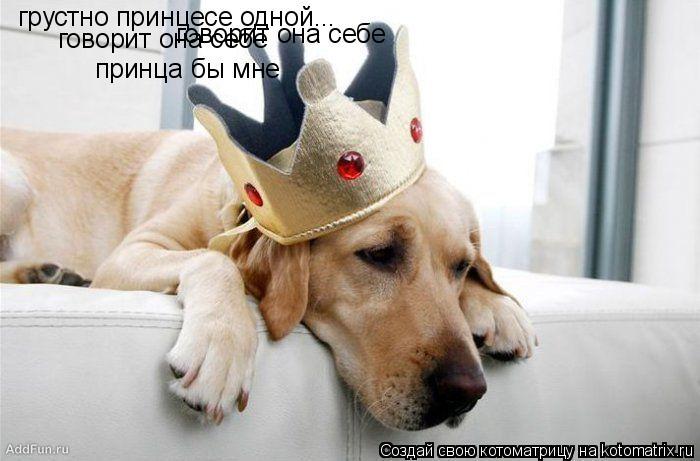Котоматрица: грустно принцесе одной... говорит она себе говорит она себе принца бы мне