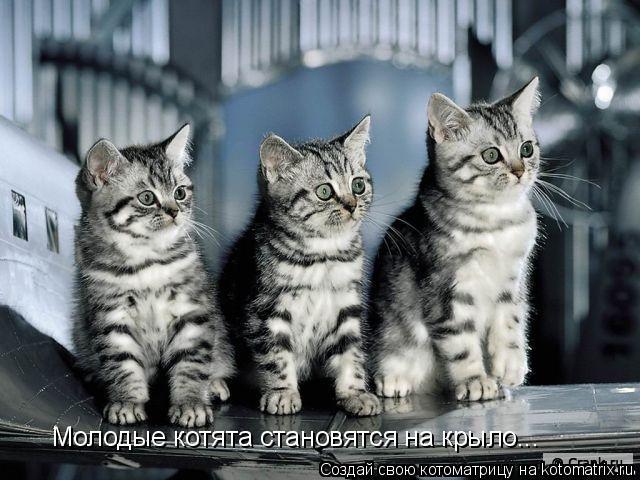 Котоматрица: Молодые котята становятся на крыло...
