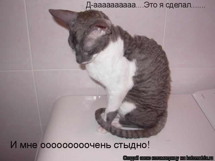 Котоматрица: Д-аааааааааа....Это я сделал....... И мне ооооооооочень стыдно!