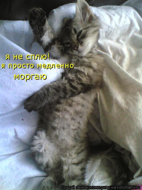 Котоматрица: я не сплю! я просто медленно  моргаю