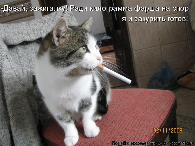 Котоматрица: -Давай, зажигалку! Ради килограмма фарша на спор я и закурить готов!