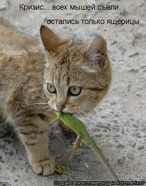Котоматрица: Кризис....всех мышей съели... остались только ящерицы