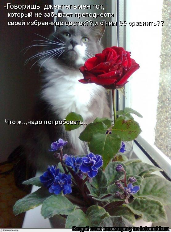 Котоматрица: -Говоришь, джентельмен тот, который не забывает преподнести своей избраннице цветок??,и с ним ёё сравнить?? Что ж..,надо попробовать..