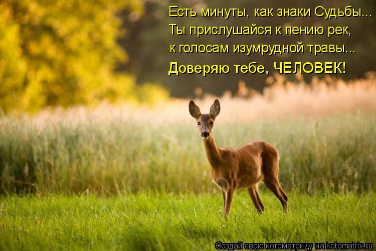Котоматрица: Ты прислушайся к пению рек, к голосам изумрудной травы….. Доверяю тебе, ЧЕЛОВЕК! Есть минуты, как знаки Судьбы...