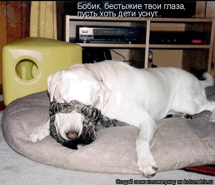 Котоматрица: Бобик, бестыжие твои глаза, пусть хоть дети уснут..
