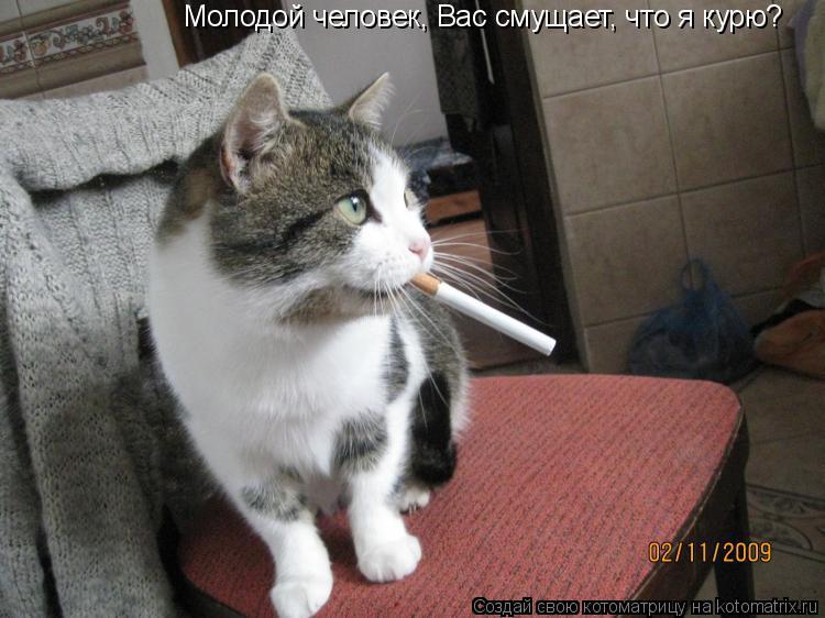 Котоматрица: Молодой человек, Вас смущает, что я курю?