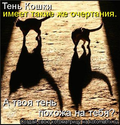 Котоматрица: Тень Кошки имеет такие же очертания. А твоя тень похожа на тебя?