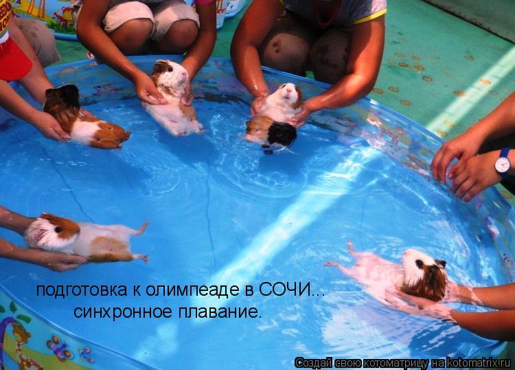 Котоматрица: подготовка к олимпеаде в СОЧИ... синхронное плавание.