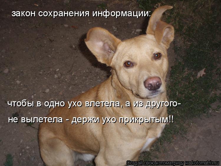 Котоматрица: закон сохранения информации: чтобы в одно ухо влетела, а из другого-  не вылетела - держи ухо прикрытым!!