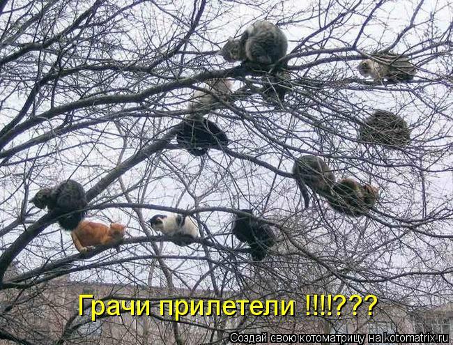 Котоматрица: Грачи прилетели !!!!???