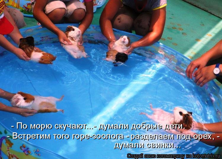 Котоматрица: - Встретим того горе-зоолога - разделаем под орех, - думали свинки...  - По морю скучают...- думали добрые дети.