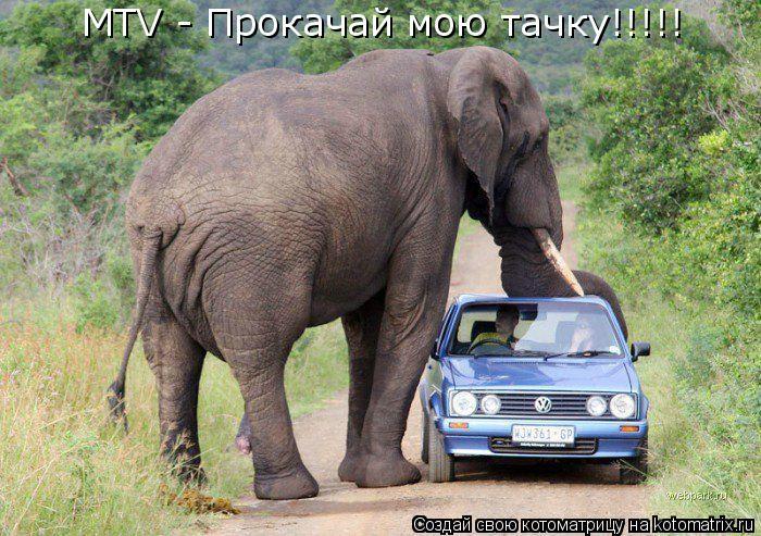 Котоматрица: MTV - Прокачай мою тачку!!!!!