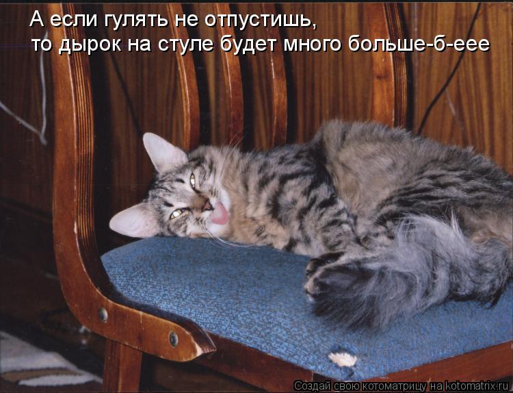 Котоматрица: А если гулять не отпустишь,  то дырок на стуле будет много больше-б-еее