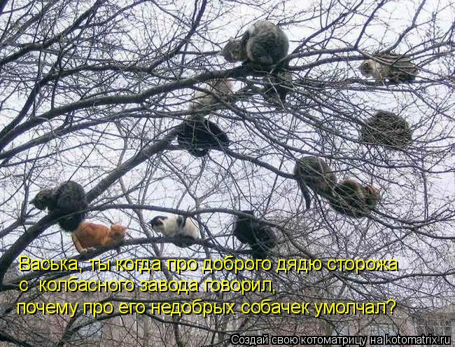 Котоматрица: Васька, ты когда про доброго дядю сторожа  с  колбасного завода говорил,  почему про его недобрых собачек умолчал?