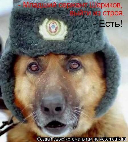 Котоматрица: - Младший сержант Шариков,  выйти из строя.  - Есть!