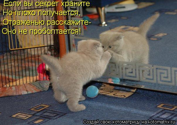 Котоматрица: Если вы секрет храните Но плохо получается, Отраженью расскажите- Оно не проболтается!