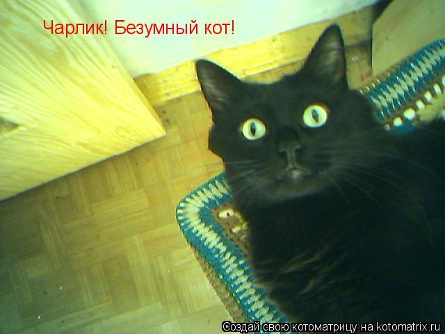 Котоматрица: Чарлик! Безумный кот!