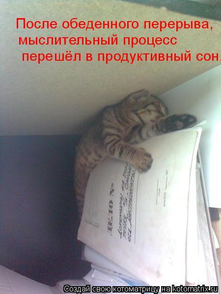 Котоматрица: После обеденного перерыва,  мыслительный процесс  перешёл в продуктивный сон.