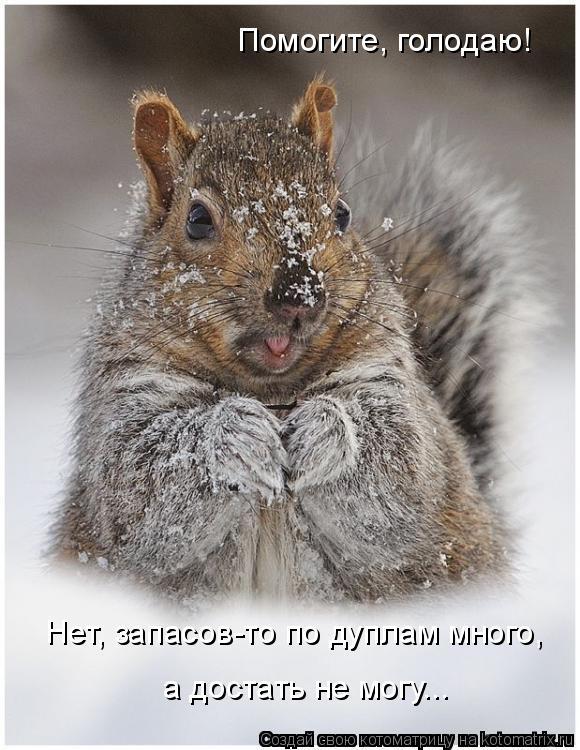Котоматрица: Помогите, голодаю! Нет, запасов-то по дуплам много, а достать не могу...