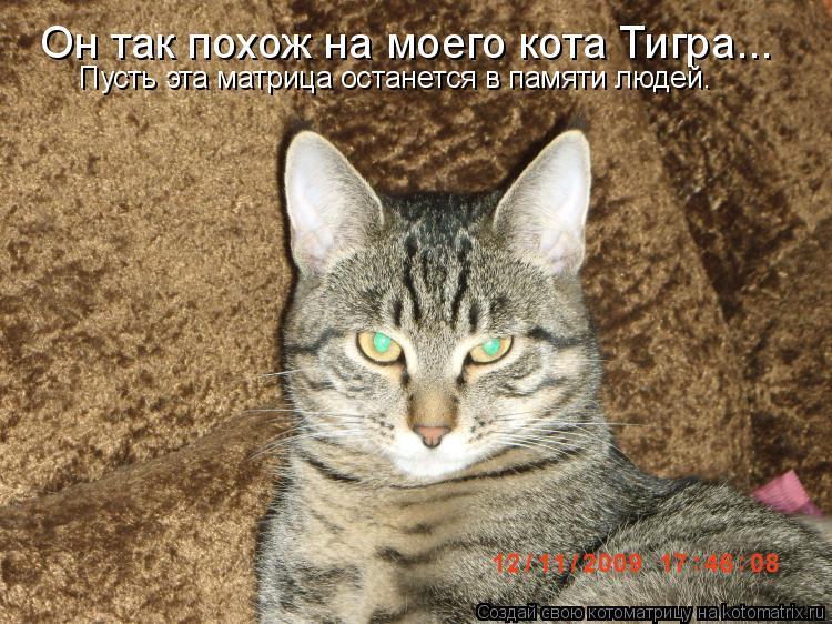 Котоматрица: Он так похож на моего кота Тигра... Пусть эта матрица останется в памяти людей.