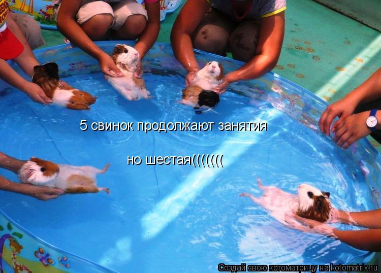 Котоматрица: 5 свинок продолжают занятия но шестая(((((((