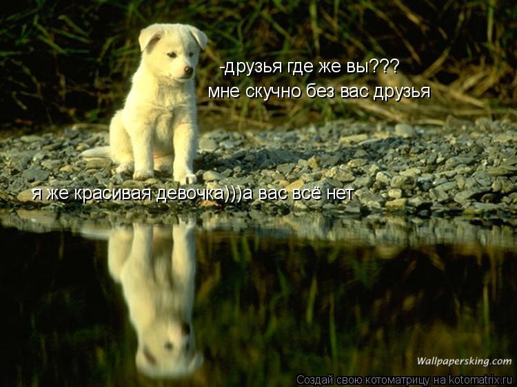 Котоматрица: -друзья где же вы??? я же красивая девочка)))а вас всё нет мне скучно без вас друзья