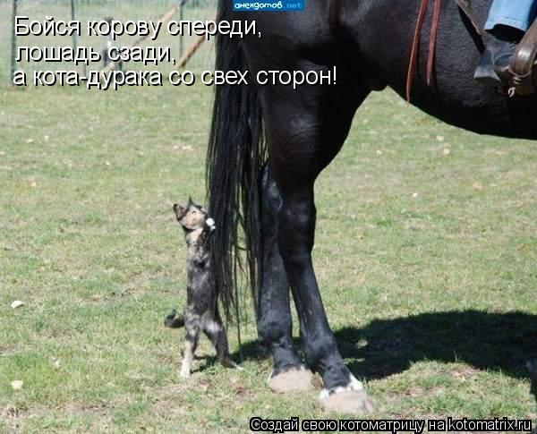 Котоматрица: Бойся корову спереди, лошадь сзади, а кота-дурака со свех сторон!