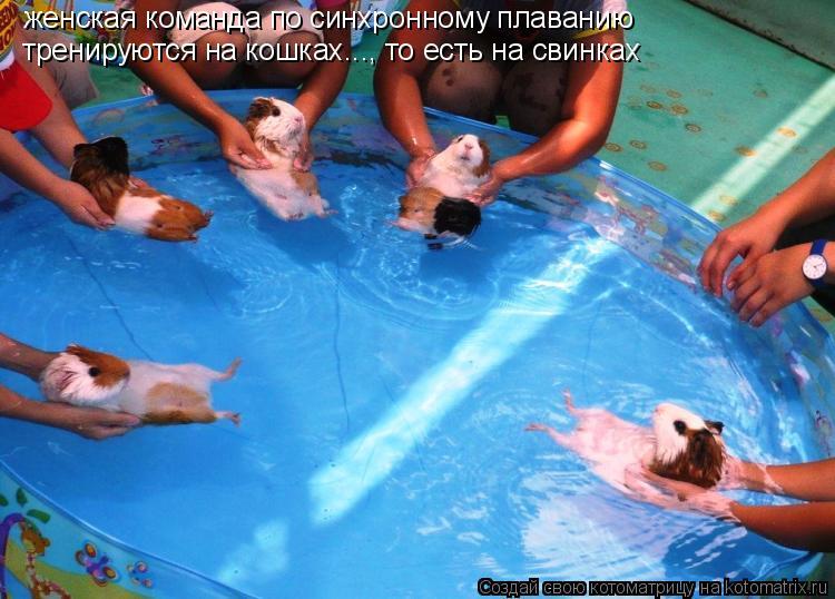 Котоматрица: женская команда по синхронному плаванию тренируются на кошках..., то есть на свинках