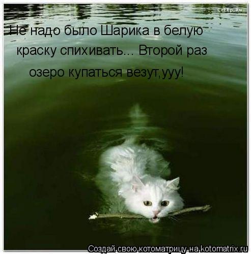Котоматрица: Не надо было Шарика в белую  озеро купаться везут,ууу! краску спихивать... Второй раз